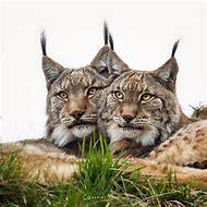 Beautiful Wild Animals Photography