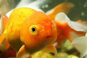 Futter Für Wildvögel Selber Machen : fischfutter selber machen ~ Michelbontemps.com Haus und Dekorationen