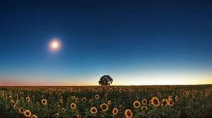 Jardiner Avec La Lune : permaculture comment jardiner avec la lune bio la une ~ Farleysfitness.com Idées de Décoration