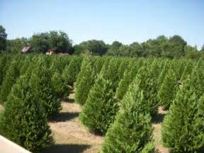 best times to plant trees and shrubs trees plants nursery