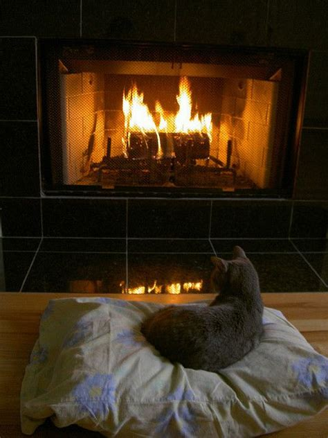 cats sitting   fireplace    feel