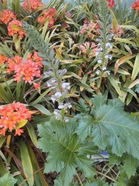 flowering plants for shaded areas for the garden