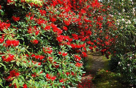 was blüht im august schottische pflanzenwelt schottlandinfos de