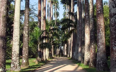 rio de janeiro jardim botanico  ai ferias