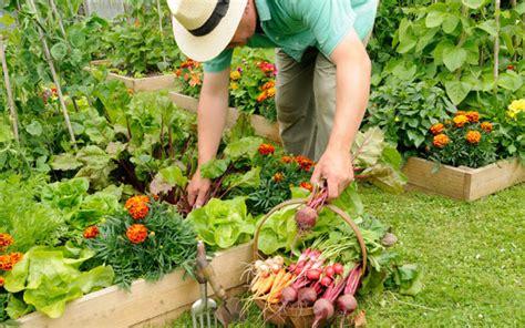 Garden Vegetarian - make your veg comfortable in raised beds telegraph