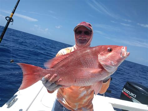 grouper gag ars offshore florida