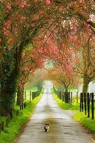 Spring Beautiful Country Roads