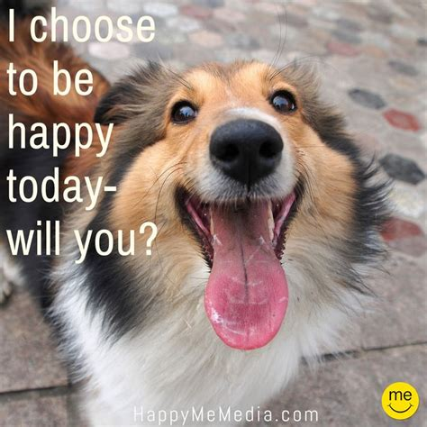 happiness quotes  happy  media images