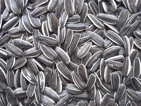 sun food sunflower seeds
