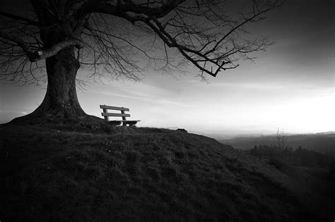 Photo Gratuite Arbre, Banc, La Solitude, Paysage Image