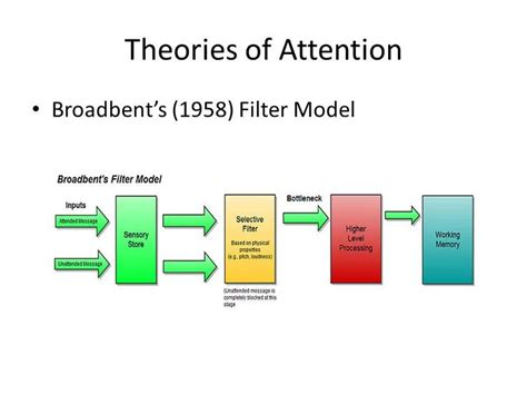 donald broadbent filter model  selective attention