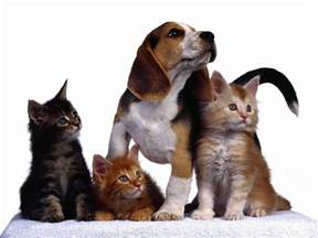 cats and dogs cat and wallpapers wallpaper cave