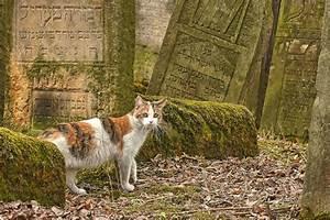 Religion: Friend or Foe of Animal Activism? - ANIMAL ...