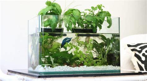 So Wird Aus Einem Aquarium Ein Aquaponischer Garten