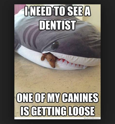 Dentist Memes - 24 dentist memes that are seriously funny sayingimages com