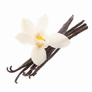 Vanilla Flower Png | www.imgkid.com - The Image Kid Has It!