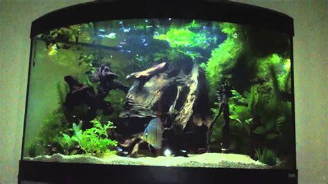 discus set   litre corner fluval aquarium youtube