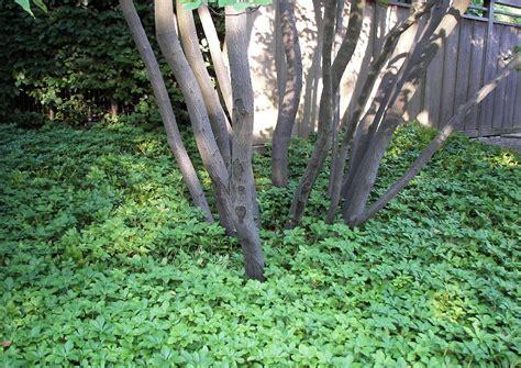Bodendecker Am Hang by Hangbepflanzung B 246 Schungen Im Schatten Geeignete