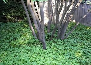 Hang Bepflanzen Bodendecker : hangbepflanzung b schungen im schatten geeignete ~ Lizthompson.info Haus und Dekorationen