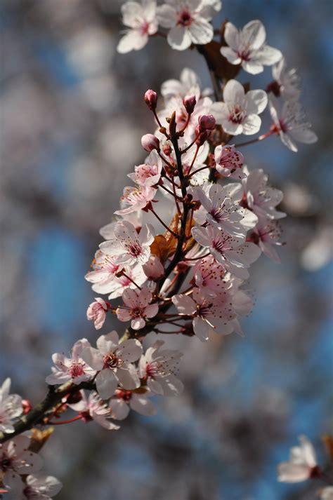 Free Images : tree branch fruit flower petal food