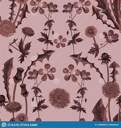 Texture Seamless Watercolor Dandelions Wildflowers Pattern Flowers