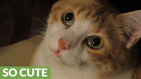 Cute Cat Face Is Definitely Meme Worthy Youtube