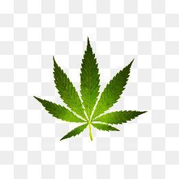 Marijuana Png Images  Vectors And Psd Files Free