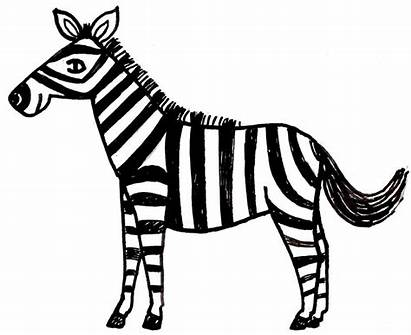 Zebra Coloring Pages Cartoon Printable Drawing Clipart