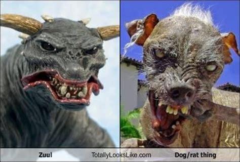 image 26471 sam the world s ugliest dog know your meme