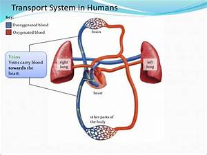 10  Transport System In Organisms E-learning