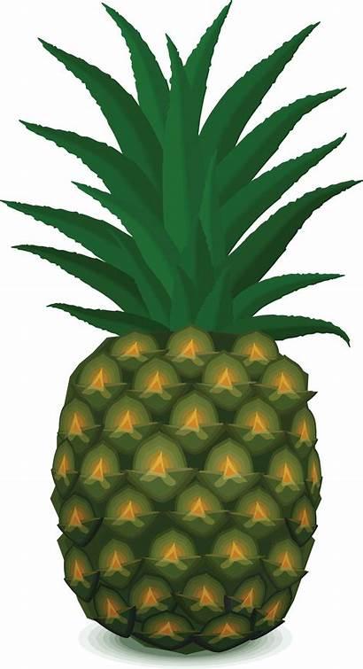 Pineapple Spongebob Clipart Pinapple Nanas Clip Transparent