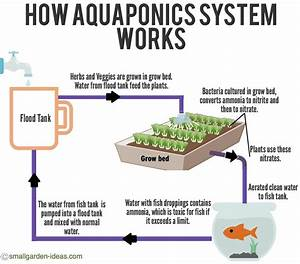 Aquaponics Cycle Diagram