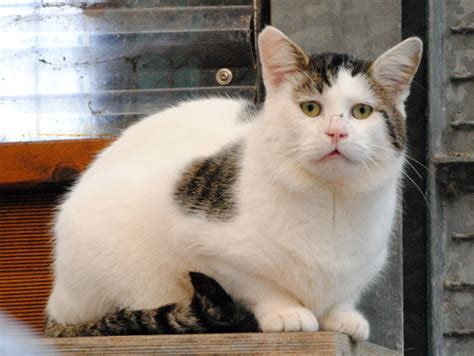fiv positive katzen tierheim aachen