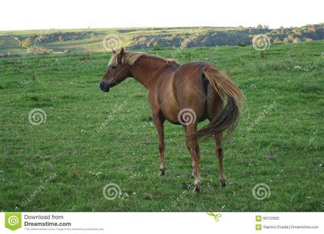 ungulate horse toed odd belonging mammal equidae equus ferus taxonomic caballus outdoor