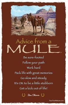 advice   mule grand canyon national park