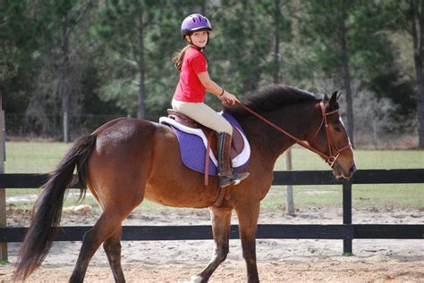 riding horseback lessons horse club fun ranch rocky mountain