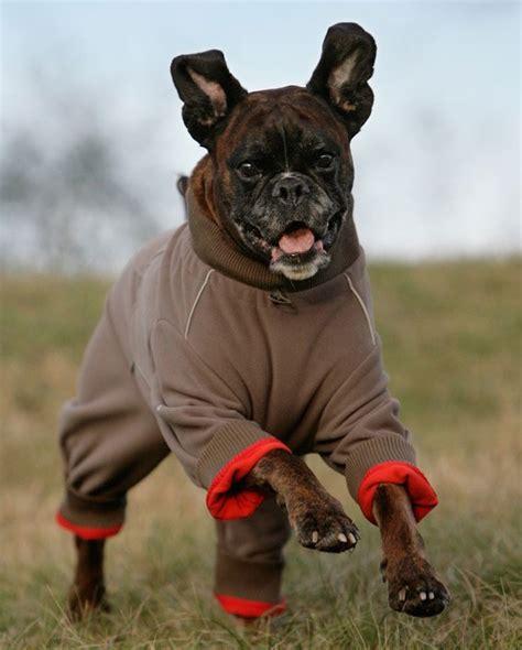 regenmantel für hunde mit bauchschutz hundebekleidung und hundem 228 ntel g 252 nstig kaufen