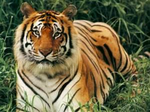 Beautiful Animals Safaris: Wild animal news