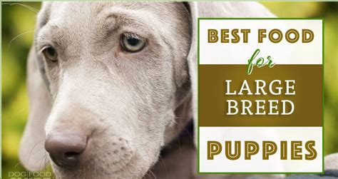 large breed puppy foods review pupfection