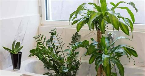 bathroom plants      choose