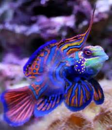 Bright Colored Saltwater Fish