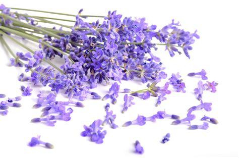 fresh petals top scents that elicit emotion