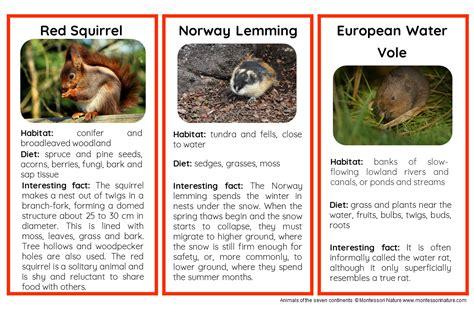 animals  europe nomenclature  information cards
