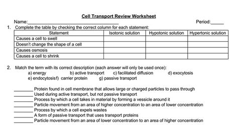 cell transport review worksheet docs