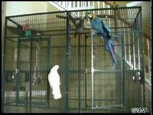 Cage A Perroquet : un perroquet ouvre sa cage mission impossible youtube ~ Teatrodelosmanantiales.com Idées de Décoration