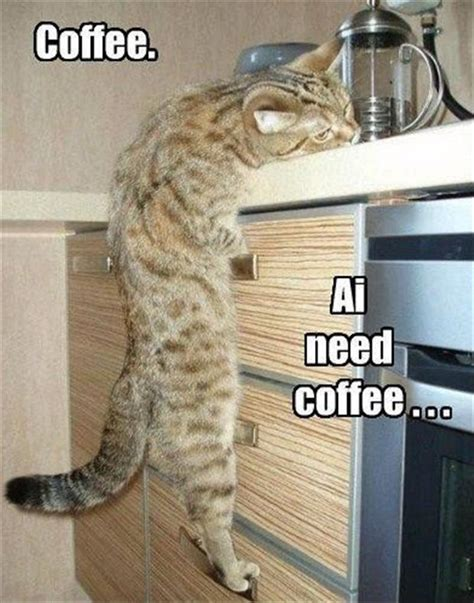 Need Coffee Meme - coffee ai need coffee cat memes comix funny pix