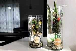 Orchideen Im Glas : saubere sache cocoon orchids zimmerpflanzen im glas ~ A.2002-acura-tl-radio.info Haus und Dekorationen