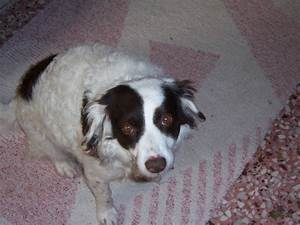 My dog has leishmaniasis (also known as kalazar ) Should I ...