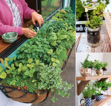 12 Cool Small Herb Gardens That Won't Take Much Space