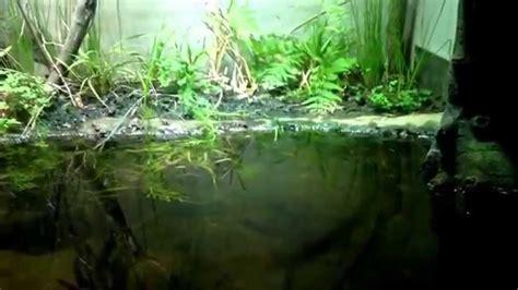 terrarium aquarium grenouille